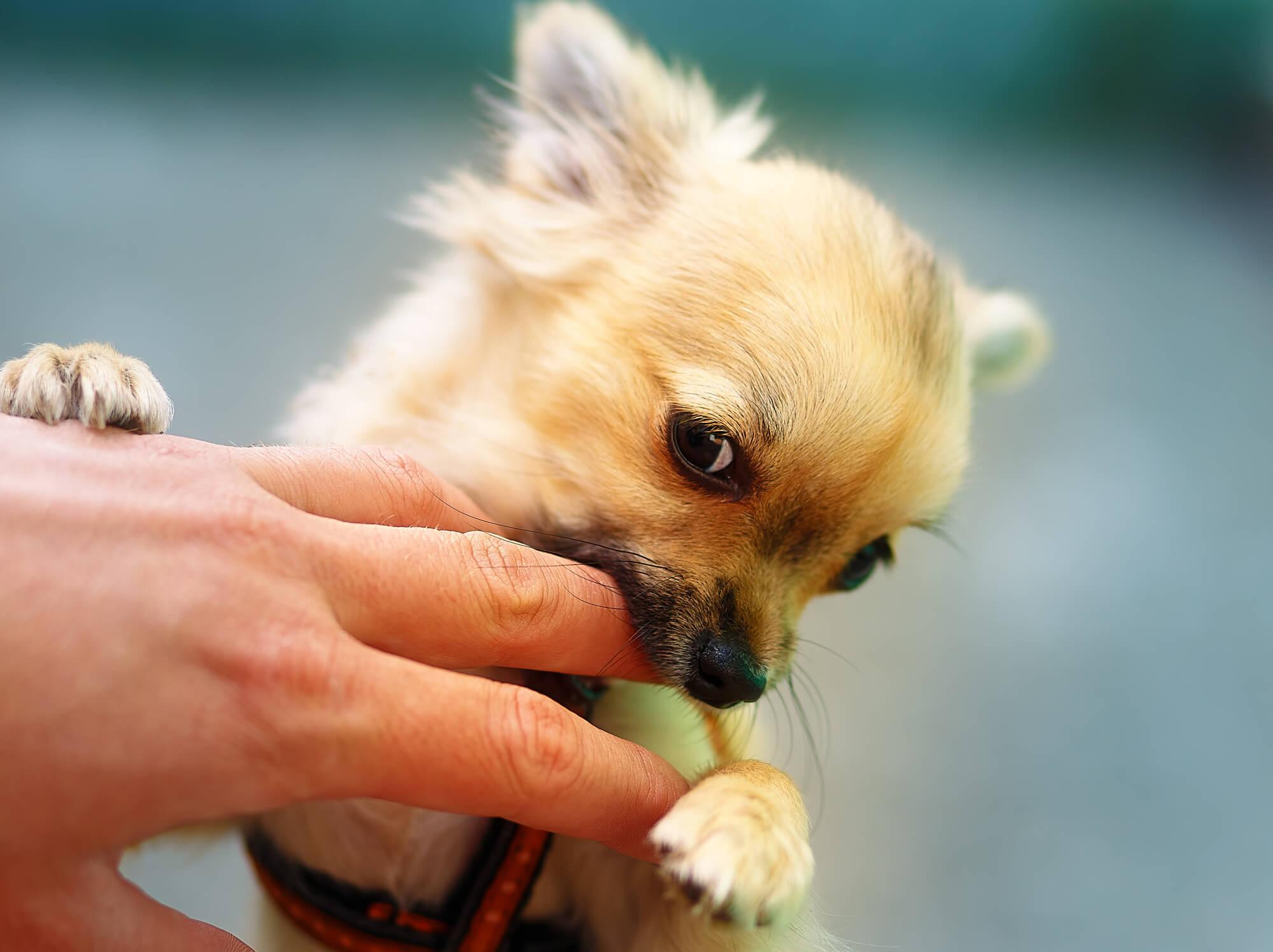 犬に噛まれる